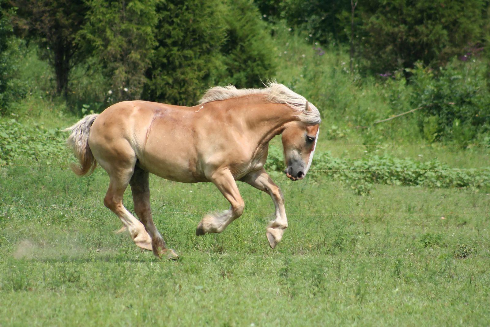 О �ем �а��каже� ма��� коня