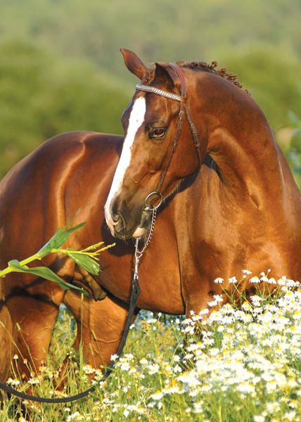 Картинка морда лошади